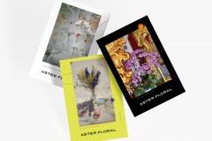 Aster Floral Poster Design by Emily Ernest